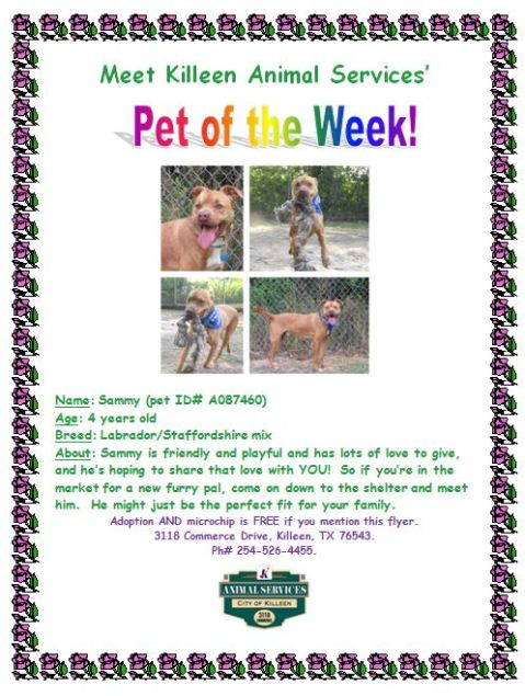 Pet of the Week_Sammy